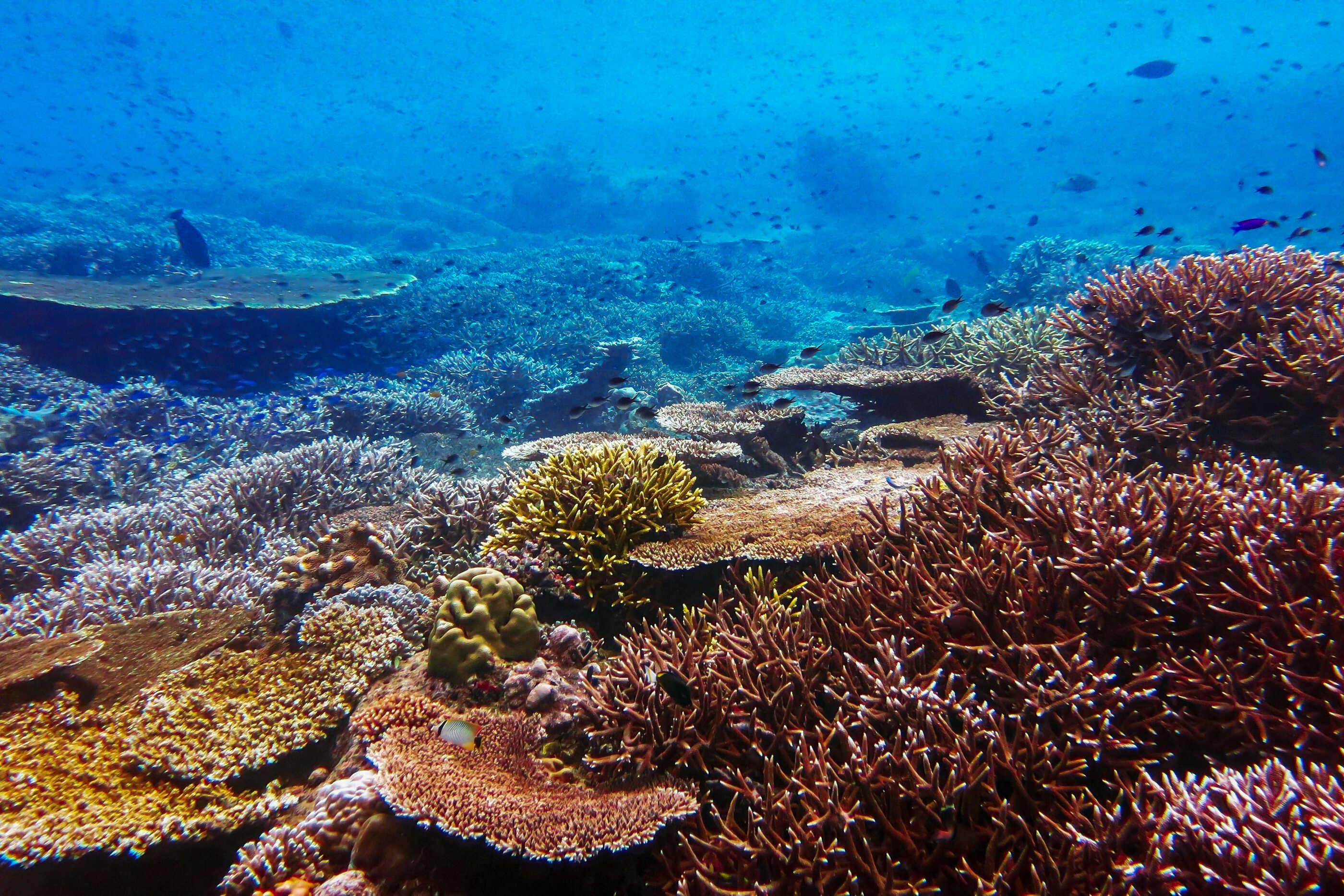 Reef World 3