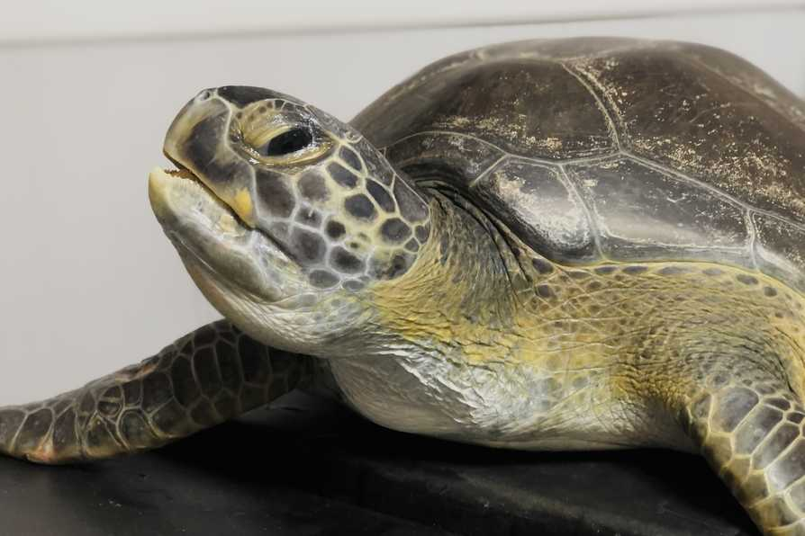 Turtle Talay in the rescue centre 2