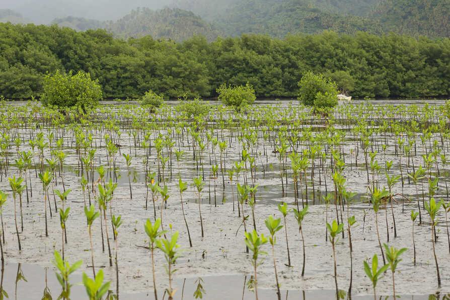 Global Nature Fund 3