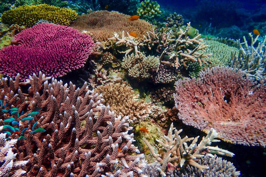 Reef World 1