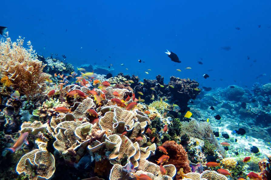 Reef World 2