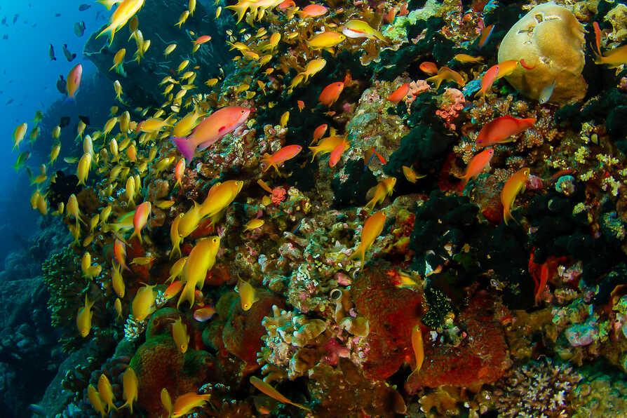 Reef World 4