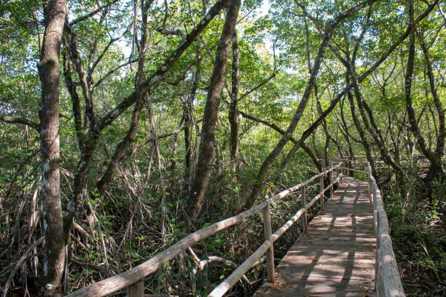 Dom Rep Global Nature Fund Bridge
