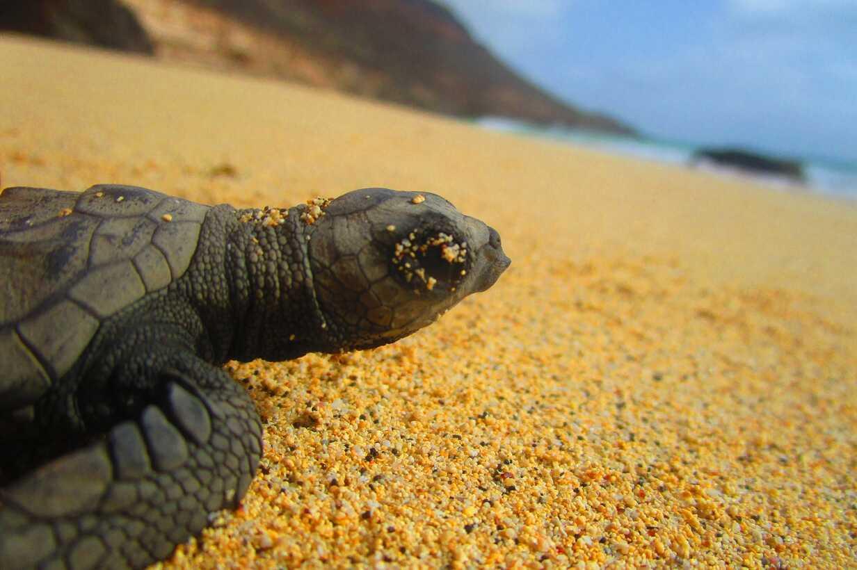 Turtle1 Serra Negra_Hatching_ 2016